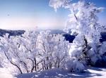 눈꽃 만개한 겨울기차여행 떠나요