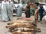 엔조이이집트, 이슬람 휴일 'Eid Al-Adha' 동안 이집트 여행시 유의사항 발표