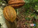 CNN Freedom Project Chocolates Child Slaves