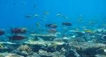 바이스로이수중환경 (사진제공: 멘토투어)