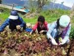자연치유문화 생태계 구축을 위한 시민모임 '멋진인생클럽' 회원 35명은 4월 21~22일 양일간 경남 하동군 악양면 상신흥마을로 자연치유마을 체험여행을 다녀왔다. (사진제공: 엔힐링미디어)