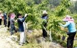 청주시 공보관(과장 나기수)은 2012. 5. 20(일) 본격적인 농번기를 맞아 청원군 남이면 석실리를 찾아가 농촌 일손돕기 봉사활동을 펼쳤다. (사진제공: 청주시청)