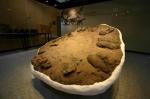 신안 압해도 수각류 공룡알 둥지 화석 (사진제공: 문화재청)