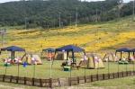 알펜시아 리조트 - 가족 캠핑장