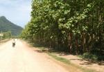 라오스에서 미개척지가 가장 많은 싸냐부리 티크조림지다. 드넓은 땅과 기온이 좋아 조림사업에 최적지다. (사진제공: 아세안투데이)