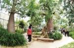 바오밥나무를 관람하고 있는 관람객