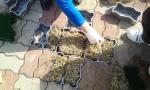 옥윤선발명디자인그룹에서 개발한 식재 기능의 보도블럭 사진
