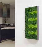     , MOSS SERIES( )