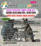 6월 9일 서울광장에서 대한민국 반려동물문화 대축제 Seoul 2013이 개최된다.