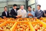 상옥슬로우시티 수출토마토 공동선별장을 방문한 박승호 포항시장은 토마토 선별작업에 참여하고 농업인들의 애로사항을 청취했다.