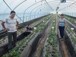 경상북도는 몽골 농업연수단 3명이 9월 29일부터 10월 28일까지 한 달간의 일정으로 경북도를 방문, 딸기재배기술과 농업발전 노하우를 배운다고 밝혔다.