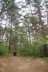 울진금강소나무숲길