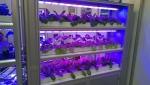 LED 식물공장 시스템