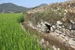 세계중요농업유산에 등재된 '청산도 구들장논'