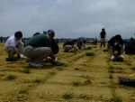 Local volunteers and Menicon staff worked side-by-side laying fresh sod at the Soma Koyo Football Ground.