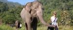 외국인 여행객이 엘리펀트 네이처 파크에서 코끼리와 산책중이다.