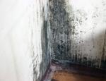 여름철 집안 곰팡이 예방은 습기 관리가 중요하다.