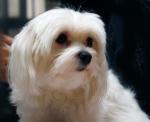 여름철 애완동물의 위생 관리를 통해 냄새를 해결할 수 있다.