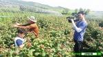 고창베리팜이 아로니아 수확을 앞두고 본격적으로 생과 판매 예약을 실시한다.