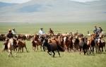 몽골리아 세븐데이즈가 알뜰 여행족을 위한 파격 상품을 출시했다.