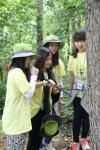 우리강산 푸르게 푸르게 2014 숲체험 여름학교 그린캠프에 참여한 여고생들이 나무의 수령을 측정하는 체험학습에 참여하고 있다.