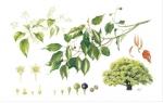 영국왕립원예협회 보태니컬 아트쇼의 2012년, 2013년 대상을 수상한 작품들이 인천 영종도서관의 벽면을 수 놓는다.
