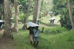 학교 시설 보수를 위한 슬레이트를 나르는 파푸아뉴기니 보스문 지역 주민들