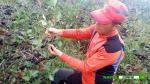 아로니아열매 수확 중인 베리팜의 오영은 대표