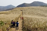 경주 동대봉산 무장봉 억새 군락지 풍경