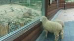 부산 유일의 동물원인 삼정더파크에는 동물들이 서로를 관람하는 진풍경이 벌어지고 있다.
