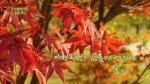 미래창조과학부 우정공무원교육원은 미래창조과학부 우정공무원교육원에서 숲을 보다라는 제목의 힐링프로그램을 KT스카이라이프와 공동 제작하여 Sky Healing 채널을 통해 19.(금)부터 방영한다. 사진은 우정공무원교육원의 아름다운 가을 풍경 모습