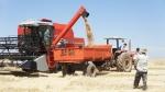 대한민국지키기 해외농업인들이 브라질에서 20만평의 친환경유기농밀을 수확하고 있다.
