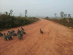 60년간 임대한 447헥타르의 토지 안에 3km에 달하는 비포장도로가 나 있다.