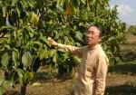 버려진 노니밭을 라오스 원주민들과 일궈 세계적 상품화에 성공한 한국인 굿피플 유덕상 라오스 지부장