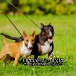 국내 유일의 국제 인증 반려동물 전문 기업 동물행동심리연구소 폴랑폴랑이 도그 워커 아카데미를 진행한다