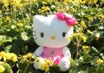 헬로키티아일랜드가 서귀포 유채꽃 국제걷기대회를 후원한다
