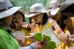 우리강산 푸르게 푸르게 _숲체험 여름학교 그린캠프에 참여한 여고생들이 숲과 나무를 주제로 체험학습에 참여하고 있다