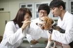 반려견을 키우는 사람들이 강아지와 입맞춤 등 밀접한 신체적 접촉을 해도 구강 내 세균 전염 가능성은 낮다는 연구결과가 나왔다.