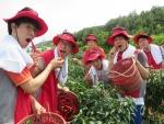 LG디스플레이 신입사원 120여명은 지난 28일, 메르스로 인한 내수 부진, 일손 부족, 가뭄 등으로 어려움을 겪고 있는 경북 선산군 생곡리 농가를 찾아 고추 따기 작업에 일손을 보탰다.