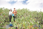 고창베리팜은 아로니아생과 판매량이 출하 이후 크게 증가하고 있다고 밝혔다