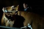 매그넘포토스의 알렉스 웹의 카메라에 포착된 나주 한우농가, 2013년 작품