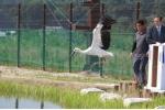 2014년 6월 18일 황새귀향식 훈련장 내에서 황새방사 장면