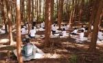 전라남도광역정신건강증진센터에서 사회복지전담공무원 150명을 대상으로 장성 축령산 일대에서 쉼(休) 캠프 Healing Feeling을 운영하였다.