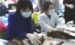 2014년 11회 구조교육 중  야생조류 골절 정복 실습 장면
