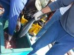 황동어망을 이용한 친환경 연어 양식 (사진제공: 국제구리협회)