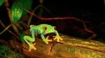 러브 네이처, UHD 야생 및 자연 비디오 스트리밍 서비스 32개국에서 시작