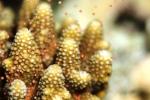 몰디브에서는 일년에 한번 수백만 개의 산호가 동시에 알을 뿜어내 마치 바다 속에서 눈보라가 이는 듯한 자연현상을 볼 수 있다 (사진제공: 반얀트리 호텔 앤 리조트)