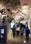 엔터식스가 봄을 맞이하여 17일부터 4월 12일까지 2차에 걸쳐 서프라이즈 벚꽃파티 프로모션 및 서프라이즈 정기세일을 실시한다