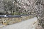 디비디비스토리가 31일 따스한 햇살따라 지천에 꽃이 피는 3월 꼭 가볼 만한 순천 봄꽃 여행지로 선암사를 추천했다