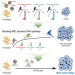 고효율·고기능성 유도간세포 생산기술 연구결과 요약